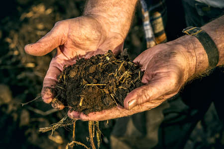 An elderly farmer holds a handful of fertile black soil in his hands. Agriculture, crop concept. Stock fotó