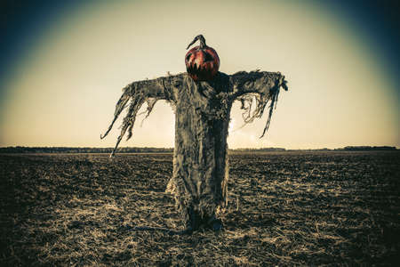 Halloween legend. Portrait of Jack-lantern with a pumpkin on his head standing in the field as a scarecrow. Фото со стока