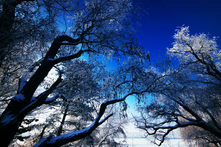 Beautiful forest with trees covered by snow. Stock Photo