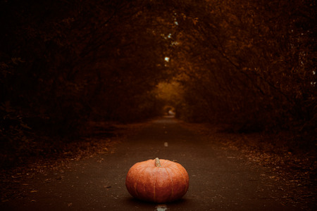 Pumpkin on a deserted road in a gloomy autumn forest. Halloween concept. Stok Fotoğraf