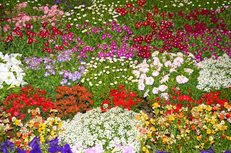 flowerbed: Flowerbed of pink, red and white flowers