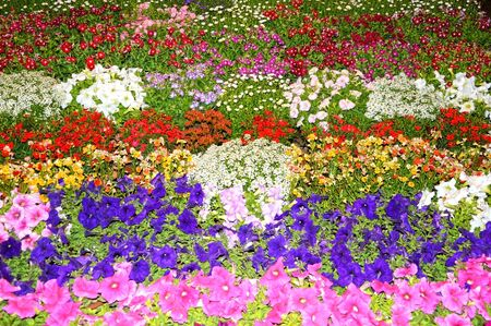 according: Flowerbed of different flowers  The flowers have been arranged according to their sizes