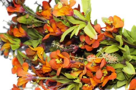 gifting: Flores de colores ex�ticos y mont�n de ellos para regalar y otros Celeberations