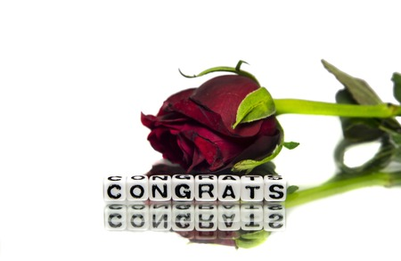 Congrats with flower of rose   photo