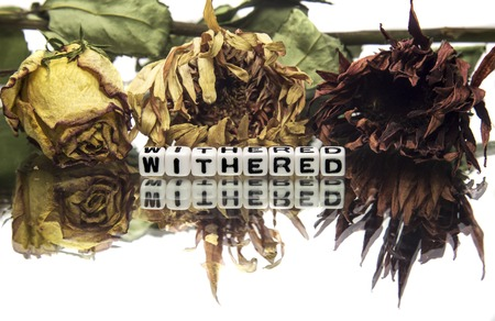 Withered text message with wilted flowers photo