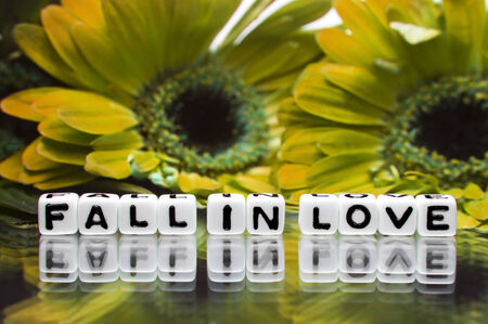 hankering: Green and yellow flowers in background with fall in love message