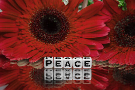 pacifism: Peace text message with red flowers in the background.