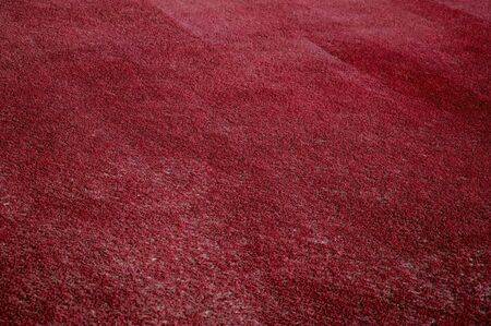 red grass: Red grass in the field of colored growth which is fresh