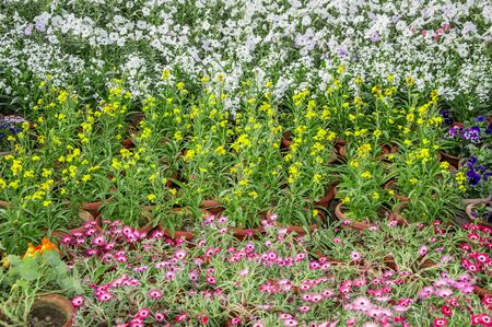 growing together: Flowering plants in multiple colors growing together
