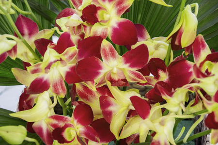 Red yellow orchids in the bouquet of flowers Stock Photo - 40515259