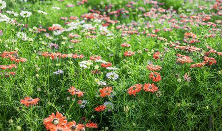 flowering plants: Multi colored flowering plants in the garden