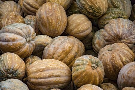Pile of pumpkins of different colors Stock Photo - 43232870