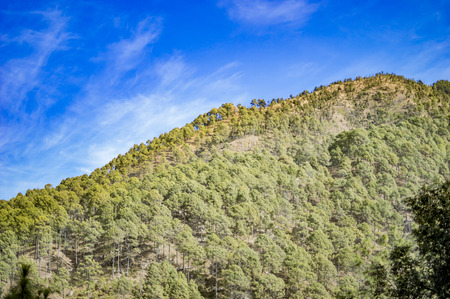 ascending: Ascending mountains with green cover of trees and grass.