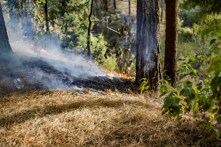 wildfire: Spreading wildfire in hills burning dry grass.