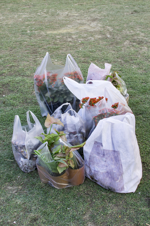 plastic bags: Plants packed for delivery in plastic bags