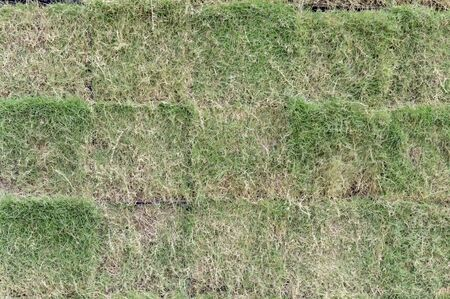 patches: Grass patches for sale and takeaway. Stock Photo