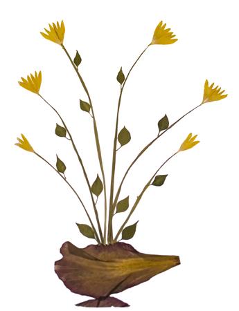 specimen: Dry sample flower specimen on white background.