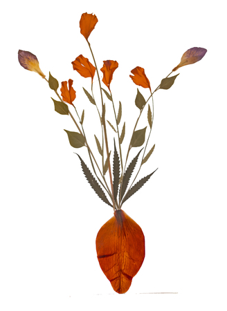 dried flower arrangement: Dry specimen of flower plant on white background. Stock Photo