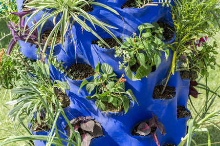 pot hole: Growing plants in plastic container