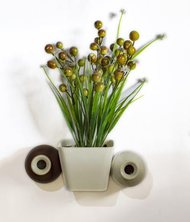 Plant and two pots of white and brown colors with fruits
