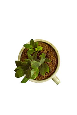 Green plant in cup shaped pot and on white surface