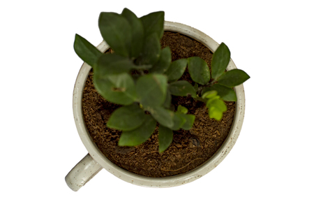 Lush green plant in soil and cup shape Stock Photo