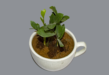 Green leaf plant in cup shaped pot on grey surface