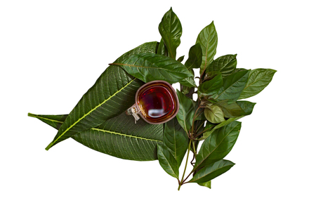 Different green leaves with red hot tea in glass cup
