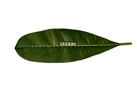 Green text message on top of a large single leaf Stock Photo