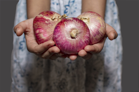Onions in hands of a female. The onions are of red color