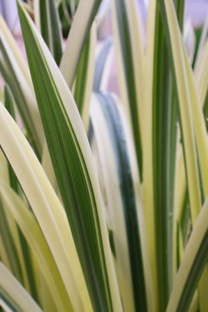 two tone: two tone plant Stock Photo