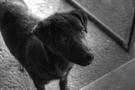 adorable black dog photo