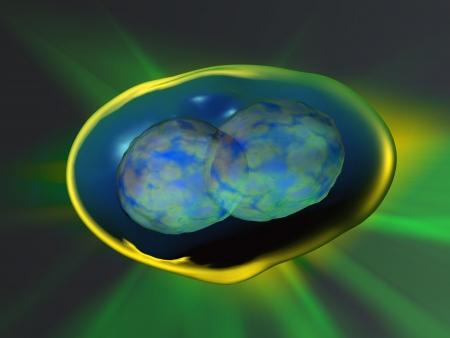 animal cell: Divisi�n Celular