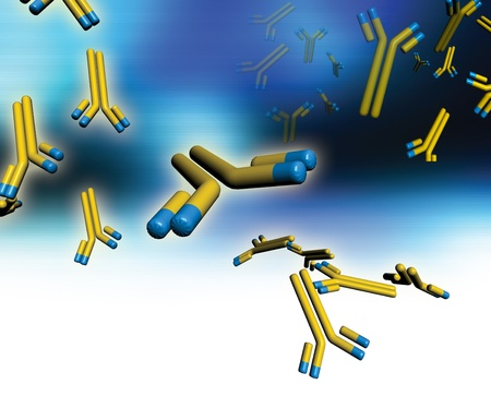 단일 클론 항체. 단일 클론 항체의 컴퓨터 작품. 이러한 Y 자형 항체들은 표적의 표면 항원의 한 타입과 동일하고 구체적으로 설계된다. 이들은 세