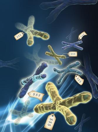 Computer kunstwerk van een menselijke chromosomen. Chromosomen uit desoxyribonucleïnezuur (DNA) gewikkeld rond eiwitten. Stockfoto - 10394400