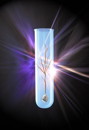 Embrionic 줄기 세포
