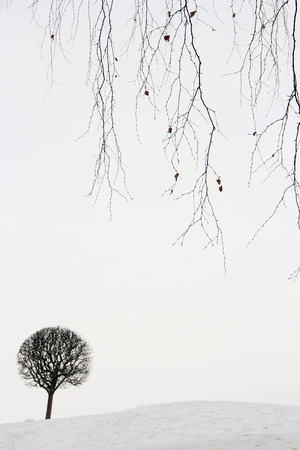Winter landscape, lonely small tree in snow.