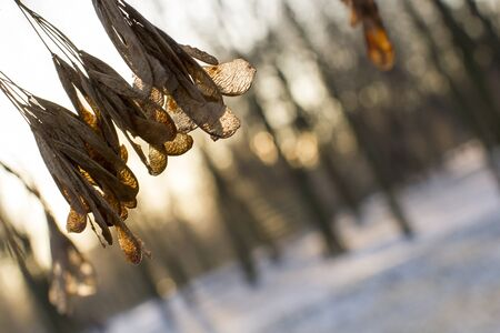 Sprig against the backdrop of the winter forest. Winter landscape.