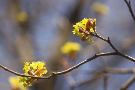 Beautiful spring flowers on a tree branch. Spring landscape. Banco de Imagens