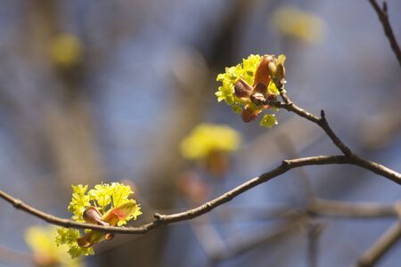 Beautiful spring flowers on a tree branch. Spring landscape. Banque d'images