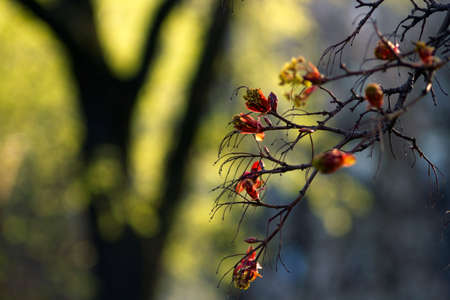 Amazing view of a blossoming tree in the sunny garden. Sunny nature. Nature flower & sun.  Nature view. Beautiful nature. Great nature. Sunny nature.  Nature life. Green nature.