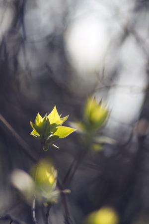 Spring mood. Sunny nature. Nature leaf & sun.  Nature view. Beautiful nature. Nature life. Green nature.