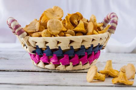 girolle: Wicker basket of chanterelle mushrooms on a white background