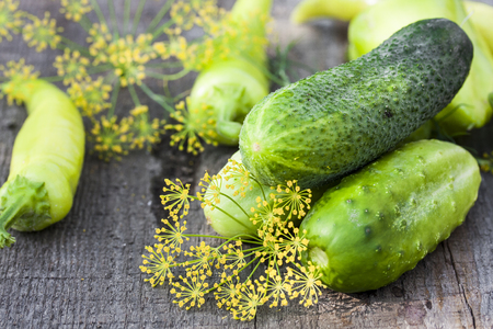 finocchio: Harvest of fresh cucumbers on the wooden background