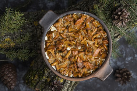 roasting pan: chanterelles in sour cream baked in a ceramic dish Stock Photo