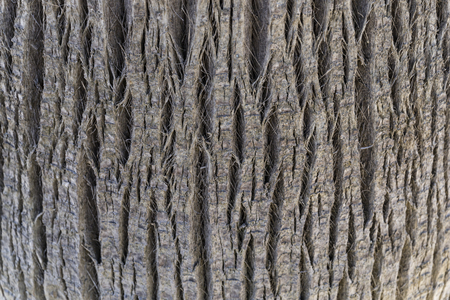 jagged tree bark with regular weft