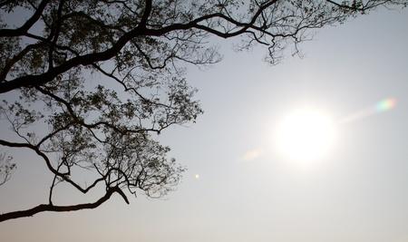 Tree shadow with shinning sunlight photo
