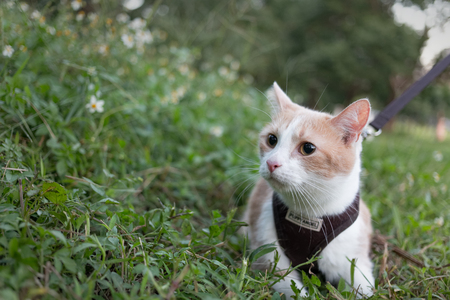 curiously: Cat Curiously Looking into the Grass Outdoors Stock Photo
