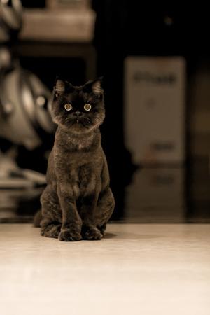 occhi sbarrati: Gatto nero con gli occhi spalancati