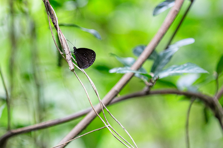 Black Butterfly on a Branch and Leaves photo